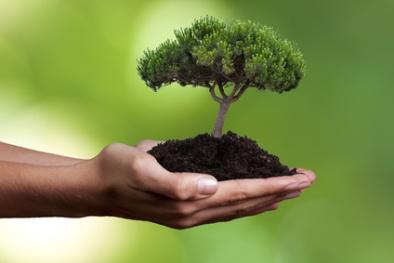 Dia da Árvore, Dia da Água, Dia das Mentiras: Apesar da crise de valores, Humanidade continua a homenagear os seus recursos naturais
